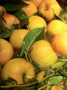 Chestnut crab apples fermenting in a honey-sweetened tarragon brine